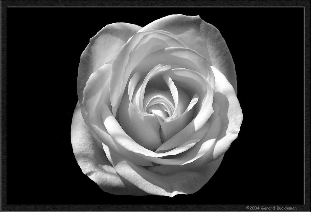 [Image: flower0004.jpg]